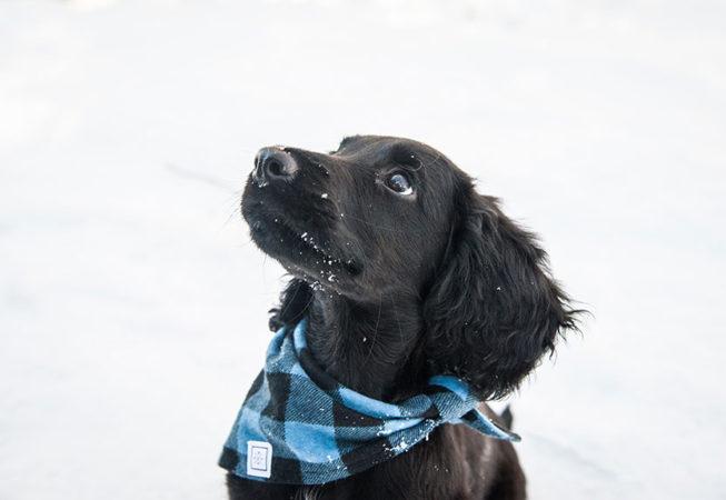 beautiful photo of puppy outside