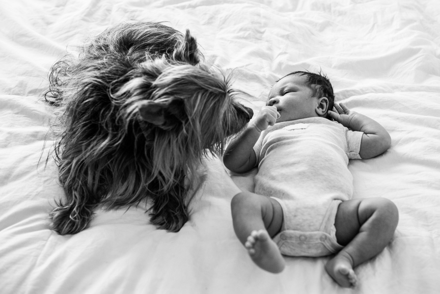 newborn baby photo baby meets dog