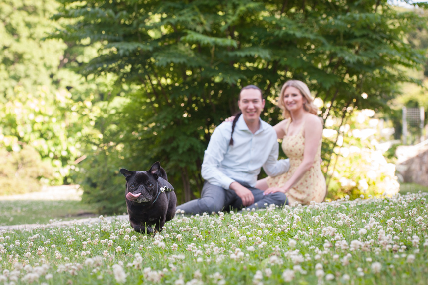 Get to Know You session engagement photos with dog