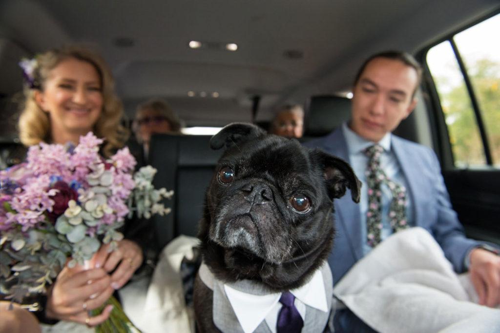 dog traveling to wedding ceremony